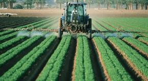 Pollution par les nitrates – Un arrêté a minima