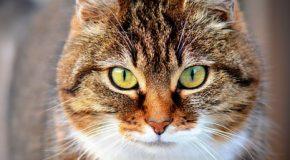 Enquête sur les  tarifs vétérinaires